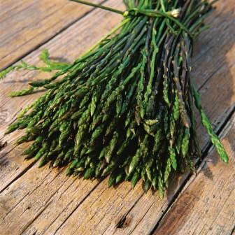 wild asparagus croatia
