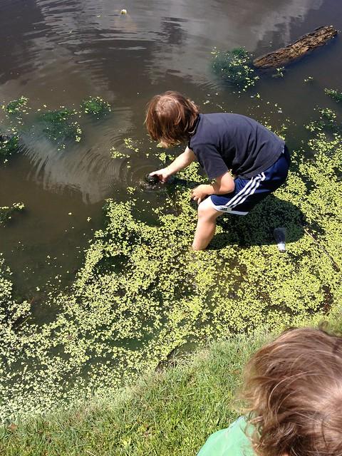 Bigger turtle catch