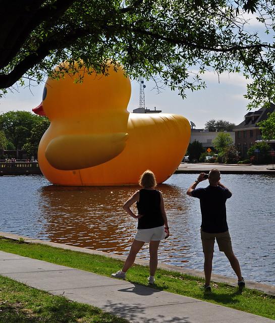 Rubber Duck (2)