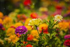 Jardín de Color