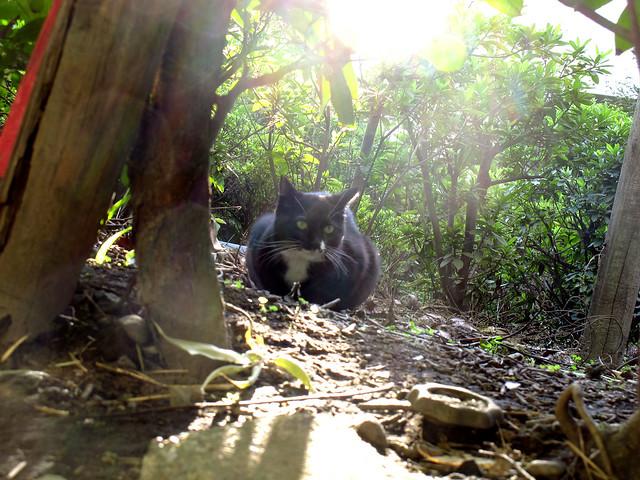 『catzElysium〜石屋の猫ファイナル』の画像