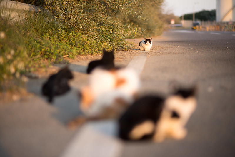 ねこon the white line