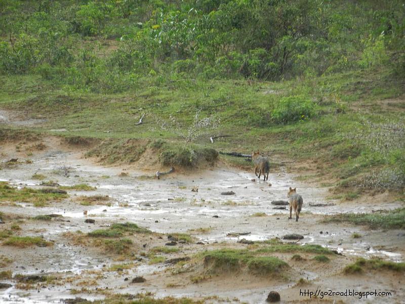 Ялла. национальный парк Шри Ланки