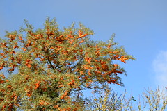 Herbstimpressionen vom Darß