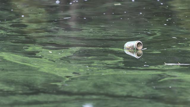 Lagoon Litter