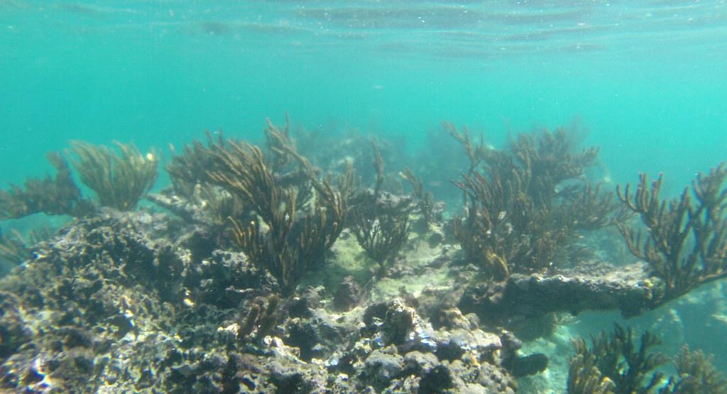 Yucatan trip photos from snorkling 11976457386_82f5d80960_b