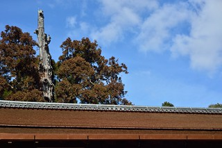Japanese cypress bark roof and blue sky.