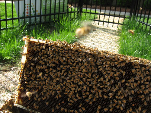 Work at USDA's National Science Laboratories helps researchers and beekeepers better understand the effects of pesticide residue exposure on honey bees.