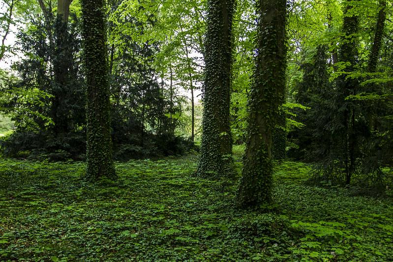 Forest in Kórnik, Poland