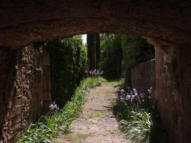 Tunnel in bloom