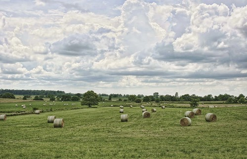 """Opportunity Grasped"", hay in Ohio field. Pinning to this page is okay. Photo copyright Jen Baker/Liberty Images; all rights reserved."