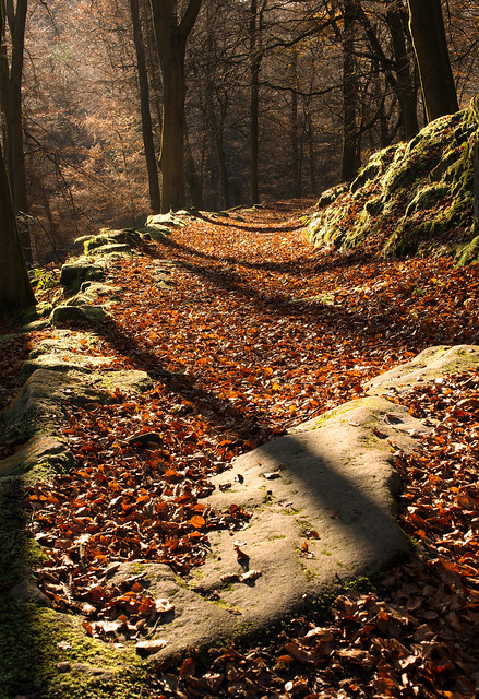 Woodland path, Hardcastle Crags, Nikon D800E, Sigma 50mm F1.4 EX DG HSM