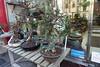 Bonsai @ L'arbre de Vie @ Montparnasse @ Paris