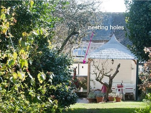 nesting holes