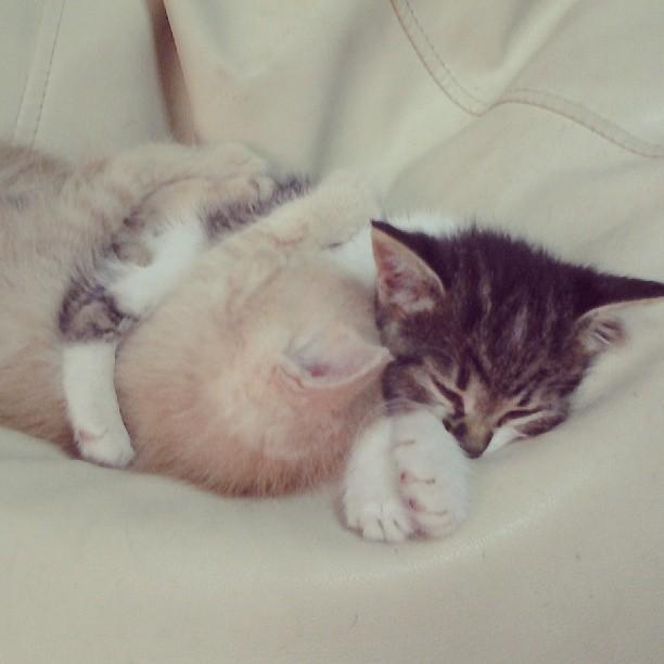 И вам сладких снов:)))
