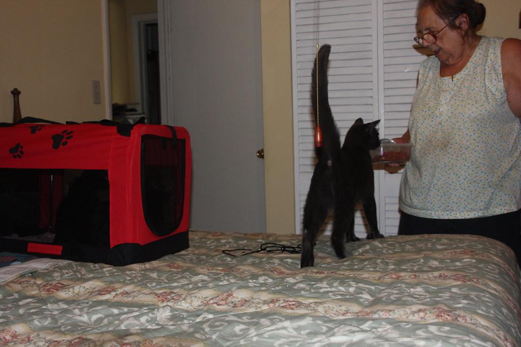 Cats_8-10-2013 (8)