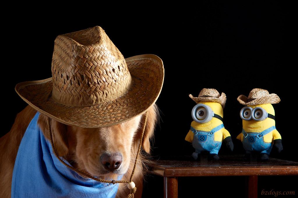 Cowboy Minions?