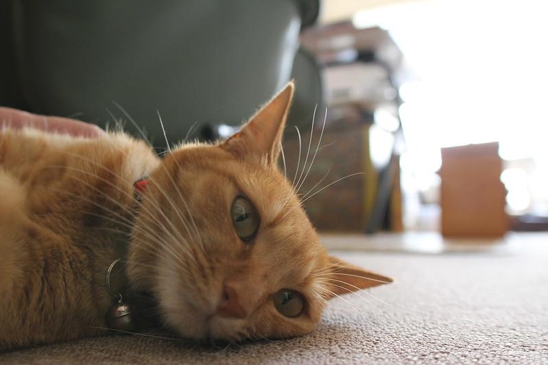cat_130920 - 3