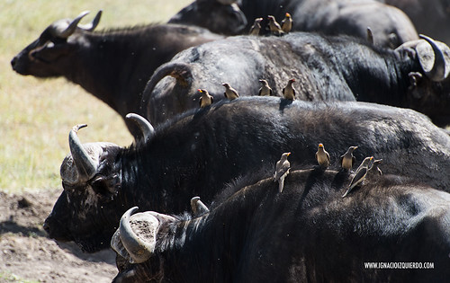 Kenia - Masai Mara 47