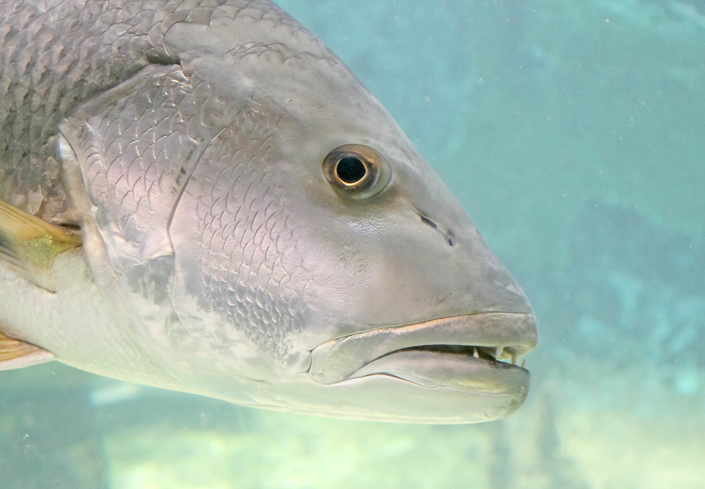 Fish Close-up, Arecibo Aquarium