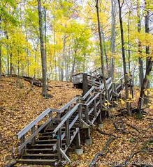 Webster Falls Side Trail