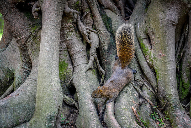 Squirrel in the Peace Park