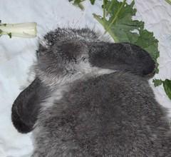raccoon(0.0), textile(0.0), koala(0.0), cat(0.0), animal(1.0), fur(1.0), pet(1.0), mammal(1.0), procyonidae(1.0),