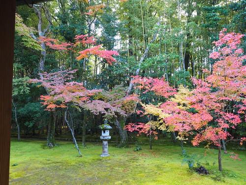 高桐院 庭園