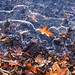 Frozen Puddle and Leaves by Grieve2011