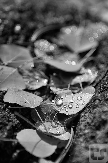 Drops of Hope
