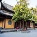 Longhua Temple - 65