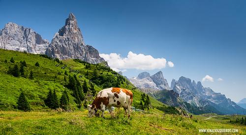 Dolomites - Le Pale di San Martino 30