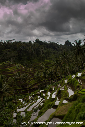 Rice Terraces - Tegalalang, Bali, Indonesia
