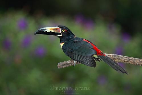 Birds Eye View by Megan Lorenz