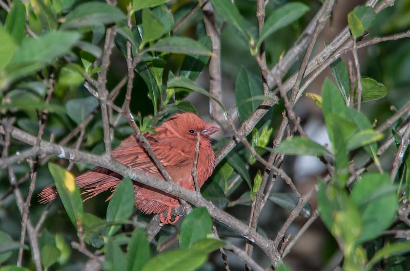 第一次貼鳥圖,請問這是什麼鳥