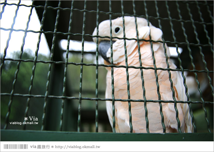 【新竹景點推薦】森林鳥花園~親子旅遊的好去處!在森林裡鳥兒與孩子們的樂園36