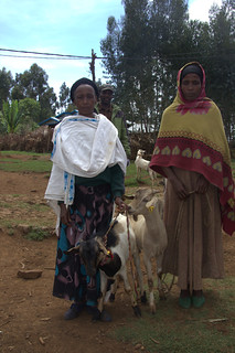 Harnessing genetic diversity for improved goat productivity project,field visit in May 2014