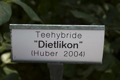 """Teehybride """"Dietlikon"""" (Huber 2004)"""