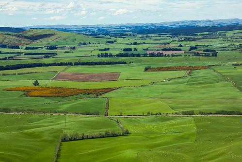 newzealand green nature rural landscape countryside scenery day view sheep cloudy farming nz southisland topf200 splendid splendour splendor greystump nzfarmlands nzsouthlands nzforesthillreserve copyrightcolinpilliner