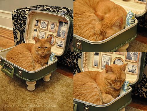 catbedsuitcase_www.brooklynlimestone.com