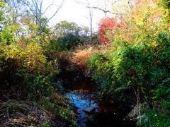 Brookside Preserve - Autumn (12)