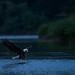 Early bird by Khurram Khan...