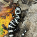 Marbled Salamander by Matt Buckingham
