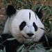 Mei Huan by smileybears