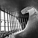 Station Arnhem / Curves and lines by jo.misere