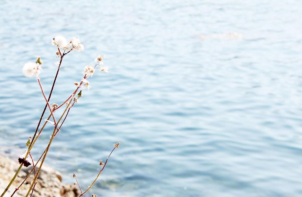 flora at sea