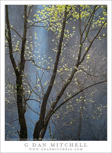 Spring Trees, Waterfall Mist