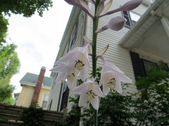 Somerville_Flowers_046