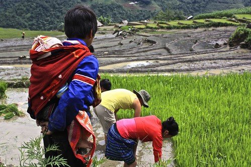 A kid (also carrying a baby) wonders why Lina is in the rice terrace