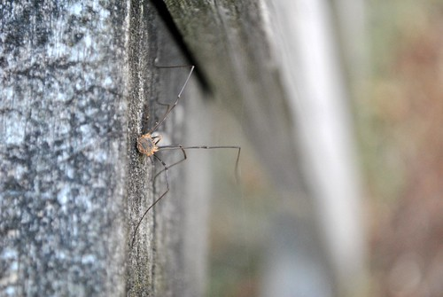 bugs and diy 034